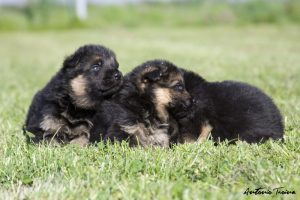 Cuccioli disponibili